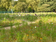 Mowing the Meadow at London Fields