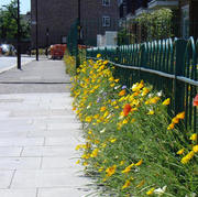Clapton Park Poppy Estate