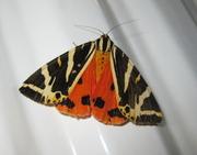 Mysterious World of Moths