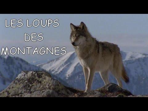 Les loups des montagnes  DOC FRENCH