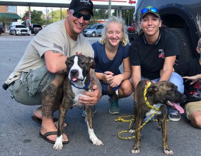 News Reporter Helps Rescuer Save 2 Dogs 'Left For Dead' in Hurricane Florence