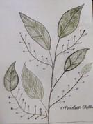 leaves light branch