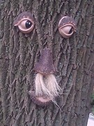 So, what question would you ask a seeing tree?