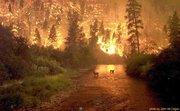 Montana Fire1