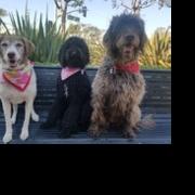 Jolene, Sassparilla & Josie