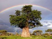 rainbow-photography-4
