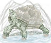 turtle pencil sketch