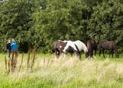 The Spirit of Epona herd