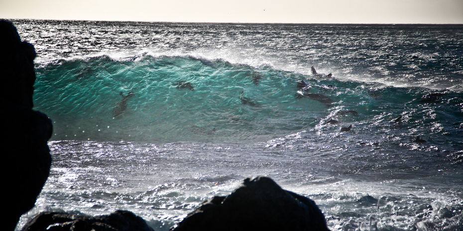 Sandy bay beauty January 2014(5)