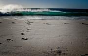 Sandy bay beauty January 2014(1)