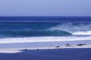 A Cape Point Trip