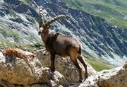 la-faune-et-la-flore-de-nos-montagnes_1734787-L