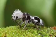 La nature n'est pas seulement belle...elle est fantastique! (fourmi Panda)