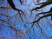tree-439171_960_720