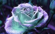Krishna en fleur