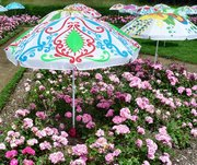 Sous les parasols, les roses.
