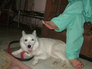 Mylo, my shy dog .. :P