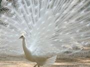 bird of beauty