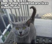 -cat-is-a-salesman