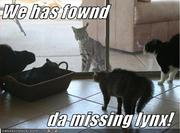 funny-pictures-cats-find-missing-lynx