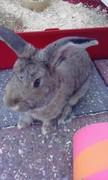 Nibbler cute 2