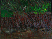 Braden River Mangroves