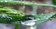 Rain Dops