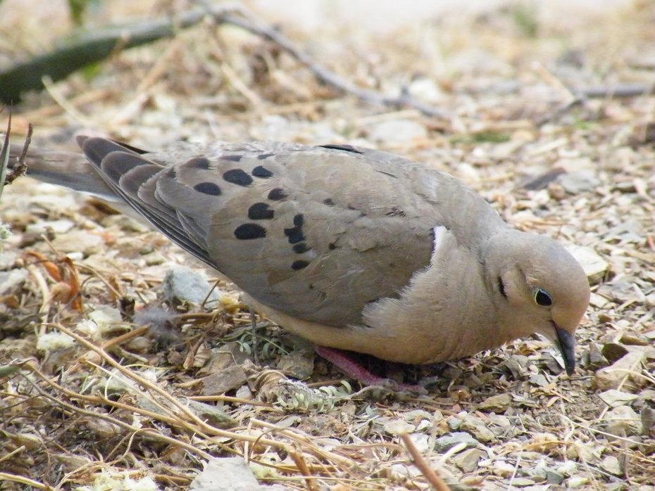 Desert Botanical Garden Bird