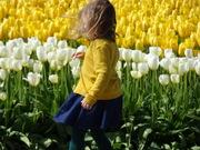 Tip Toeing thru the Tulips