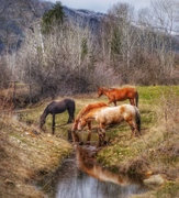 Animals and Landscapes