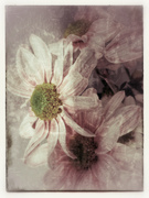 The faded blooms of summer.