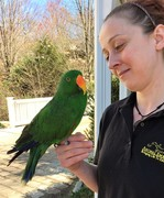 Sydney the Eclectus Parrot with Robin