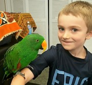 Sydney the Eclectus Parrot at Mystic & Noank Library