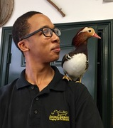 Drake the Mandarin Duck with Des
