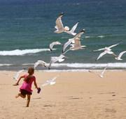 Girl and seagulls at Ludington Michigan's Stearns Beach