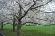 Central Spring
