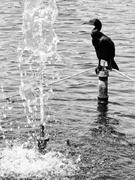Birds at The Lake