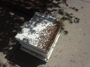 Hiving a Swarm