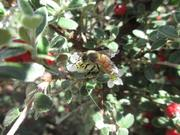 #UNMBee I snapped a few weeks ago