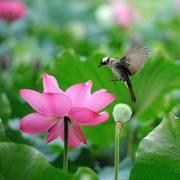 Elixir ...ou nectar