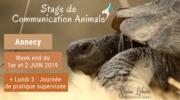 """Stage """"Apprendre à communiquer par télépathie avec les animaux"""""""