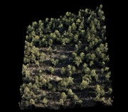 Cloud points of a plot of Pinus halepensis in southeastern Spain