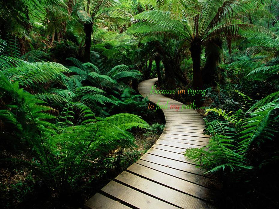 My Path, My Future