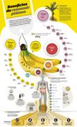 Beneficios de consumir plátano