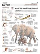 Matan a un elefante cada 15 minutos