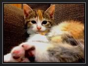 19th Ward Kittens Need Homes