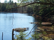 panther pond 4-30-2011 001