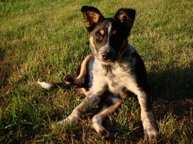 Ra'nbO Peace Doggy