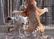 Fight-behind-bars-by-Diana-Barocsi