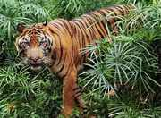hunters-hunted-by-Irawan-Subingar